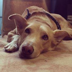 Instagram photo by @Swords-Smith (SWORDS-SMITH) | Boring dog day in the studio #swordssmithdogs #werkin #tgif