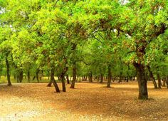Lowland mixed forest of oak located adjacent to Almyros of Magnisia region Henry Miller, Lush Green, Countries Of The World, Planet Earth, Planets, Greece, Country Roads, Europe, Nice