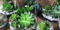 DIY vidéo décoration de succulente IKEA #ikea #plante #SUCCULENT