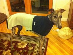 I was browsing around looking for a coat for my greyhound Klaus to help get him through the New Enlgand winter, and quickly realized that I could either spend $75+...