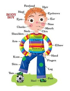 Parts Make Parts:   It takes your heel, toes, to make up your foot.  Eyes, Cheeks, mouth, nose, chin, to make your face, etc.  Ask the kids, what parts make up a larger body part.