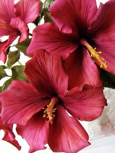Gumpaste Hibiscus