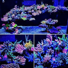Get your corals to grow like weeds with this simple LED modification. Marine Aquarium, Reef Aquarium, Aquarium Ideas, Saltwater Tank, Saltwater Aquarium, Reef Aquascaping, Reef Tanks, Marine Tank, Coral Tank