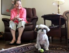 October is National Breast Cancer Awareness Month, so we thought we'd share a story of how one tiny Shih Tzu made a huge difference - by saving a woman from breast cancer.