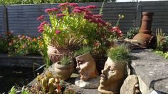 Collection of pots and sedum at Seabank.