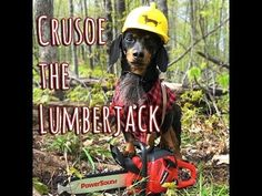 Crusoe the Lumberjack!