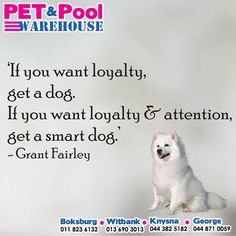 If you want loyalty, get a dog. If you want loyalty and attention, get a smart dog. - Grant Fairly #PetPool #Sunday #motivation