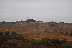 Heathland Landscape