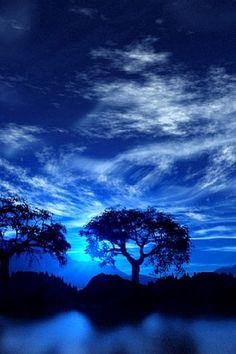 Beautiful tree silhouette against a blue sky