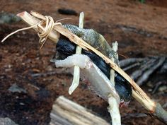 * Mungo Says Bah * Bushcraft Blog: How To Catch, Clean and Cook a Fish While Camping