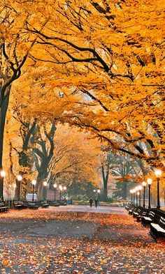 Autumn in New York by Konstantinos Metallinos - The Best Photos and Videos of New York City including the Statue of Liberty, Brooklyn Bridge, Central Park, Empire State Building, Chrysler Building and other popular New York places and attractions. Parks In New York, Ville New York, Autumn In New York, Nyc Fall, Autumn Park, Voyage New York, Autumn Scenery, Parcs, New York Travel