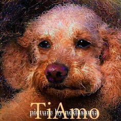 #トイプードル #イラスト #Dog 久しぶりに愛犬ティアモをお絵描きしました、印象派の絵画風に仕上げてみました。  Honeysuckle Rose - The Singers Unlimited feat. Roger Kellaway Cello Quintet http://youtu.be/OY1gK196OB0