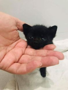 Untitled You are in the right place about Cutest Baby Animals ever Here we offer you the most beauti Cute Baby Cats, Cute Little Animals, Cute Cats And Kittens, Cute Funny Animals, I Love Cats, Kittens Cutest, Cute Dogs, Big Cats, Baby Animals Pictures