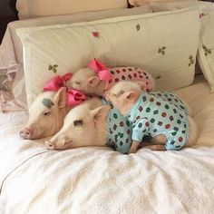 20 #Pets Who Are Having An awesome #Sunday Morning In Their #Pajamas http://ibeebz.com