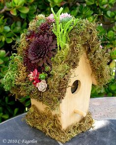 Put sheet moss on that poorly made bird house E. has and plant hens and chicks, etc on it.  Fill in top with soil to make the peak.