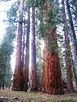 Sequoia Nat'l Park, CA