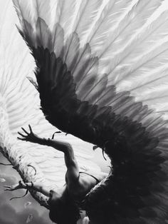 Картинка с тегом «angel and fallen»