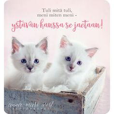Friendship, Wisdom, Valentines, Words, Cats, Quotes, Photography, Animals, Life