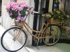Flower Bikes - a gallery on Flickr