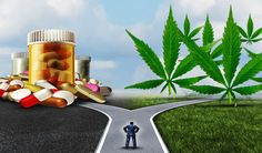 A study by the Journal of the American Medical Association has indicated that legalized marijuana in certain areas coincided with a drastic reduction in painkiller deaths. According to the study, between 1999 and 2010, within the 13 states that legalized marijuana, there was a 25% reduction in opiate painkiller overdose deaths. Study co-author Colleen Barry said that this same trend occurred in...