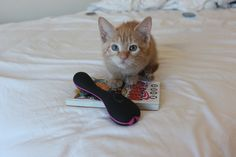 My kitten poses with the Bbold by Bswish  Read my thoughts on this vibrator here: http://wp.me/p54Qhf-6J