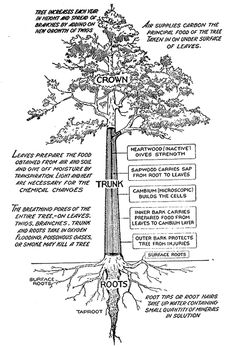 Silviculture techniques forestry and environmental ed pinterest publicscrutiny Choice Image