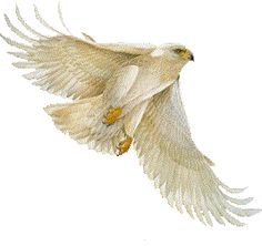 White eagle in flight.