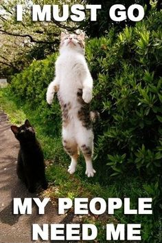 "Black Cat: ""Wut are u doing?""   White Cat: ""I MUST GO! MY PEOPLE NEED ME!"""