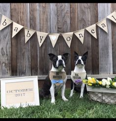Pregnancy announcements made even better with your dogs! Unique dog bandanas. Hello Hazel Co.
