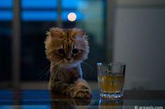 #cat #drink #animals #sweet #cute