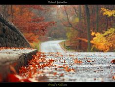 The Colors of Fall © Nishanth Gopinathan