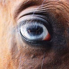 #horse #blue #eye