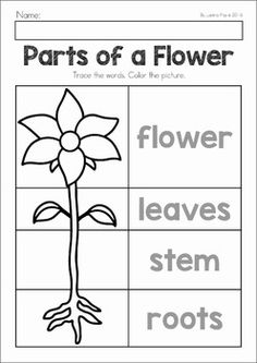 Spring Preschool No Prep Worksheets & Activities. A page from the unit: parts of a flower