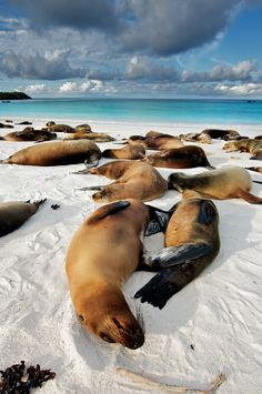 Sea lions enjoying the afternoon heat on Espaniola on the Galapagos Islands
