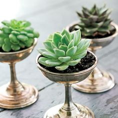 succulent plants in vintage dishes
