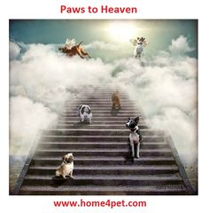 #home4pet #paws to #heaven  http://home4pet.com/Pet-Services/Journey-to-Heaven
