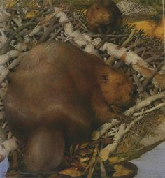 Life in the Boreal Forest | Gennady Spirin | Macmillan