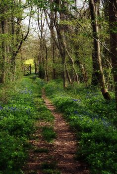 The path to the meadow gate in spring