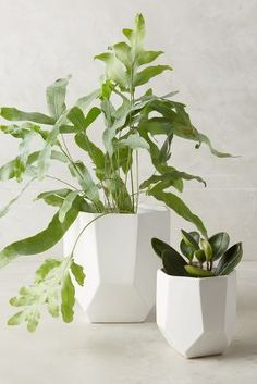 Anthro cut ceramic, faceted planters in white matte - love these as gift for plant ladies and rock hounds!