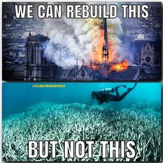 At 2 degrees C of warming of all coral reefs die. Save Planet Earth, Save Our Earth, Love The Earth, Save The Planet, Our Planet, Save Mother Earth, Save Environment, Save Our Oceans, World Problems