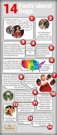 14 Facts about Dogs – Infographics – What is an Infographic I Love Dogs, Puppy Love, Cute Dogs, Fun Dog, Cat Facts Text, Dog Facts, Dog Physical Therapy, Pet Life, Dog Mom