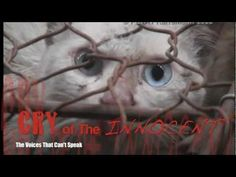 "CRY OF THE INNOCENT: The Voices That Can't Speak  A Kathleen Lowson Film   http://www.cryoftheinnocent.com  Facebook: https://www.facebook.com/CryoftheInnocent  Please LIKE us and SHARE.    ""A revealing new film explores the psychological and spiritual factors that contribute to animal cruelty in the fur industry. Rather than merely covering tales of ..."