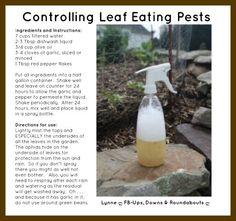 Controlling Leaf Eating Pests