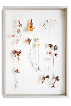 Flower Constructions by Anne ten Donkelaar, collage of cutout flower prints and dried flowers. via Behance Dried Flowers, Paper Flowers, Flower Landscape, Nature Collection, Photo Projects, Flower Pictures, Botanical Art, Flower Crafts, Community Art