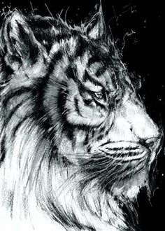 White tiger - Ink   Watercolor by Alfred Basha