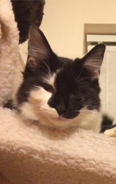 Cat missing!Black and white cat called Cody / CoCo is missing from Niblock Oaks…