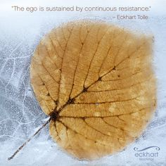 """""""The ego is sustained by continuous resistance."""" ~Eckhart Tolle Please 'Share and/or re-pin' this week's #PresentMomentReminder: To receive automatic reminders from Eckhart, feel free to sign up by clicking on this link: http://www.eckharttolle.com/present-moment-reminders/?f=1"""