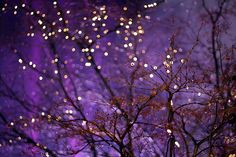 thin, lit up branches against indigo/violet sky.
