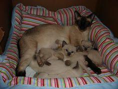 MOTHER AND CHILDREN 3 by mattfranz2002 on Flickr.