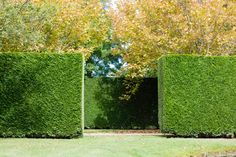 Behind the hedge Garden Fencing, Fence, Evergreen Hedge, Chia Pet, Green Architecture, White Gardens, Topiary, Hedges, Landscape Design